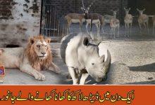 Photo of ایک دن میں ڈیڑھ لاکھ روپے کا کھانا کھا جانے والے جانور۔۔۔