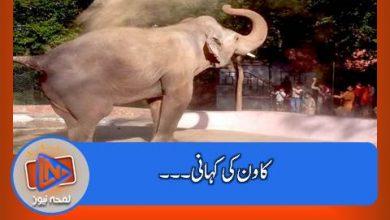 Photo of الوداع ۔۔۔ ہاتھی پاکستان کے ساتھی ۔۔۔ الوداع