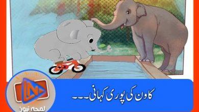 Photo of کاون: پاکستان میں برسوں جکڑے رہنے والے دنیا کے تنہا ترین ہاتھی کی کہانی