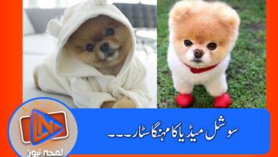Photo of انسٹاگرام پر 3 ارب 60 کروڑ روپے کمانے والا کتا