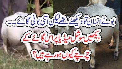 Photo of بونے انسان تو دیکھنے تھے لیکن اتنی بونی گائے ۔۔  دیکھیں سوشل میڈیا پر اس گائے کے  چرچے کیوں ہورہے ہیں؟