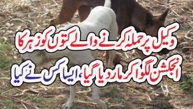 Photo of وکیل پر حملہ کرنے والے کتوں کو زہر کا  انجکشن لگوا کر ماردیا گیا،ایسا کس نے کیا