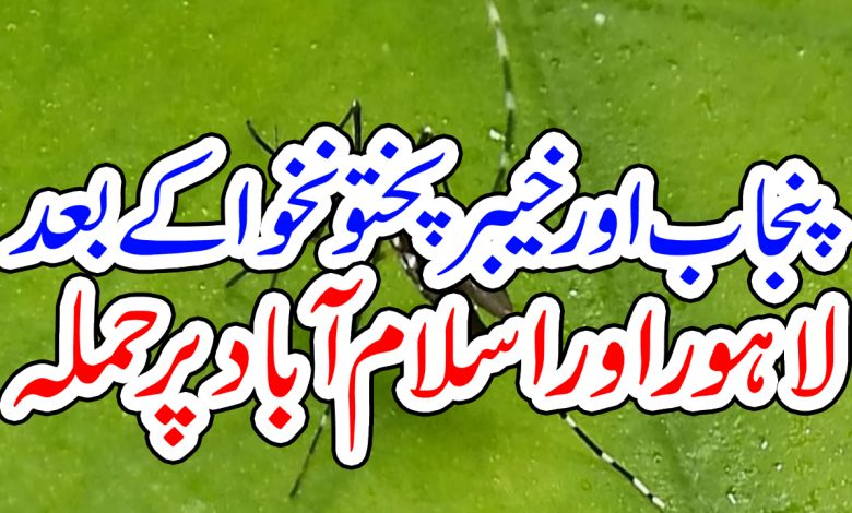 Dengue islamabad lahore KPK Punjab