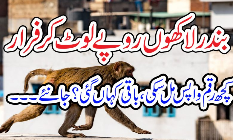 robber monkey